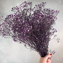 Purple Preserved Baby's Breath-Nine Zen