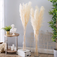 Quality Ivory Color Dried Pampas Grass Stems-Nine Zen
