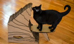 New Arrivals and New Pricing on Cat Scratchers