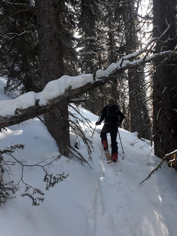 rockies splitboarding - bush whacking
