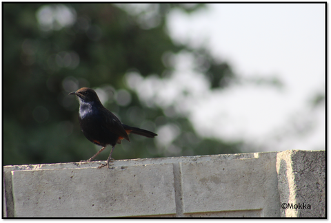 Variety of birds that fly by our farm at Narsampally, Hyderabad