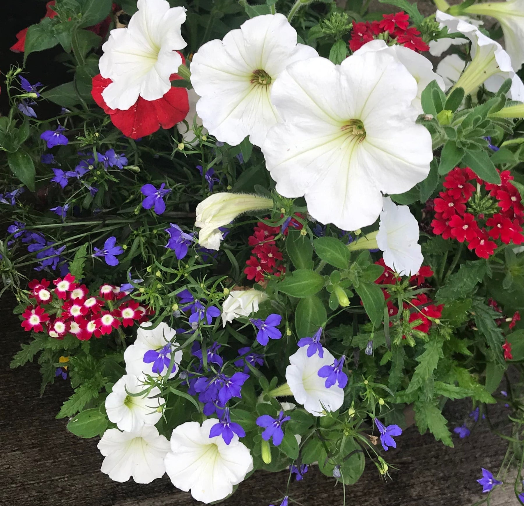 red white and blue flowers
