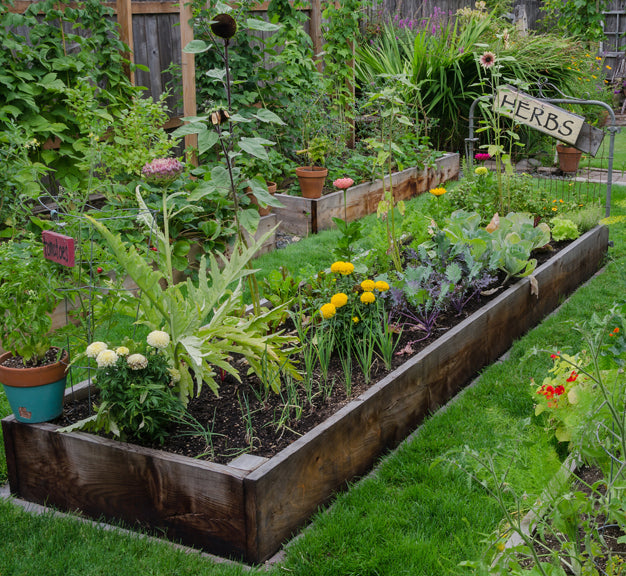 Image of established raised garden bed