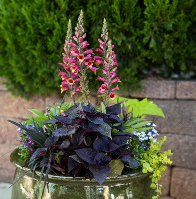 6 Sensational Container Recipes for Shade