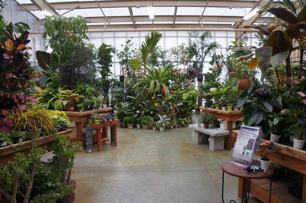 house plants at the Green acres Elk Grove Store