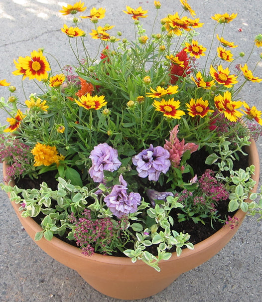 Pet-Safe Plants in a Pot