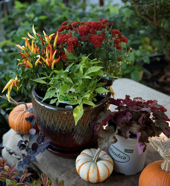 Pots with Fall Plants and Pumpkins
