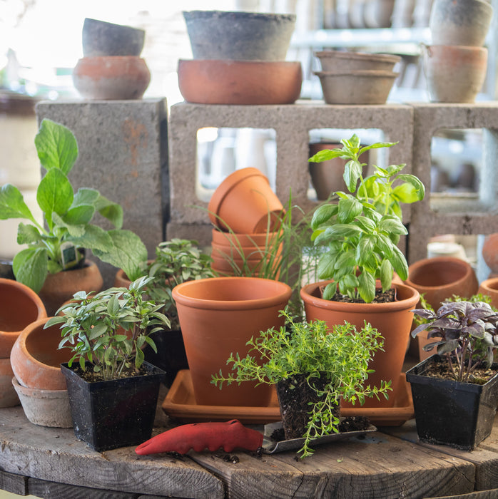 Herb Garden in Terracotta Pots