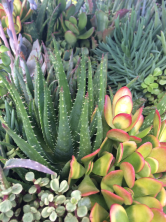Create your own succulent pot-up