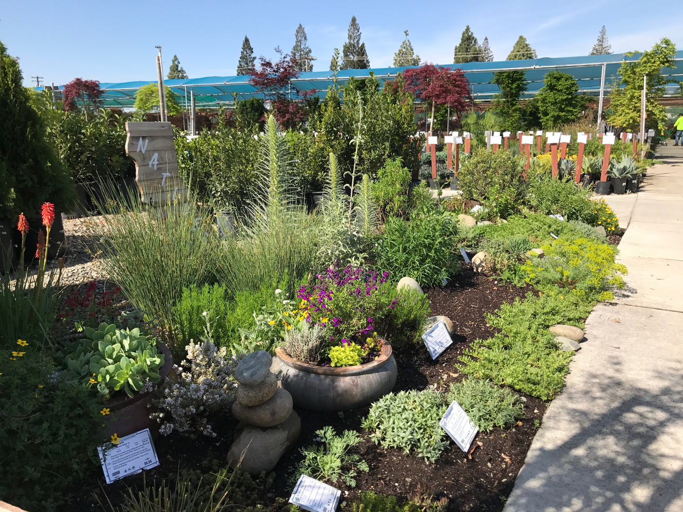 Visit our California Natives Garden at our Sacramento location