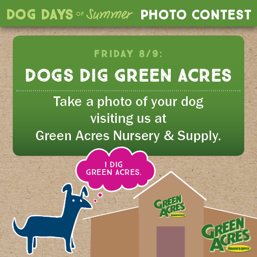 Dogs Dig Green Acres