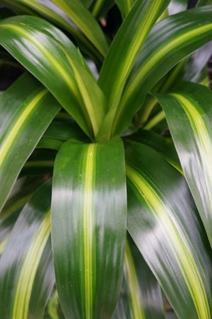 close up of plant leaves