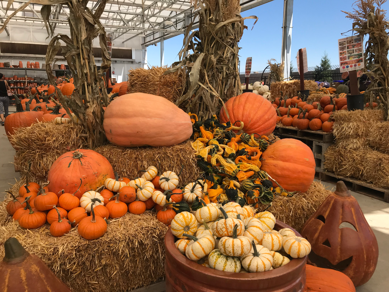 Pumpkin Patch is open at Green Acres
