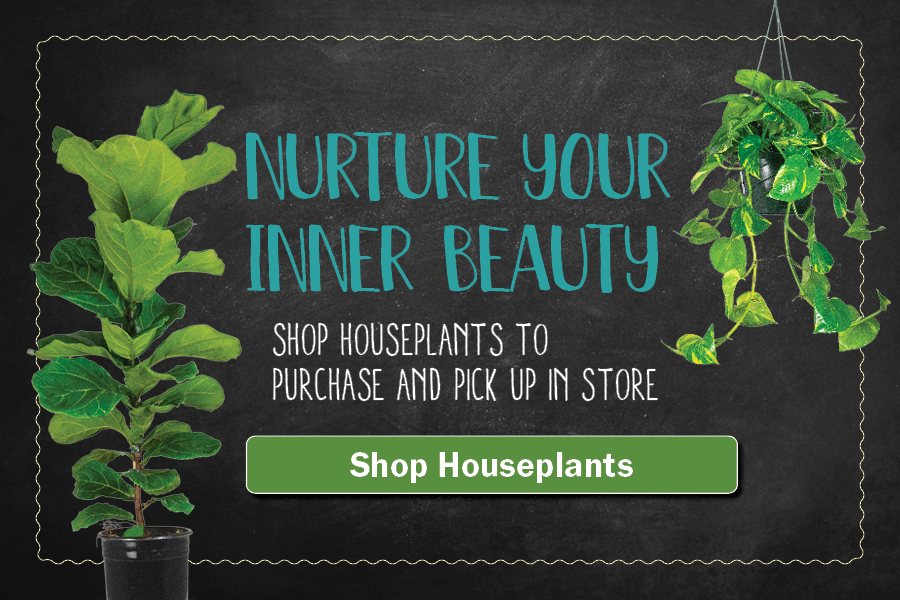 Nurture Your Inner Beauty. Shop houseplants to purchase and pick up in store.