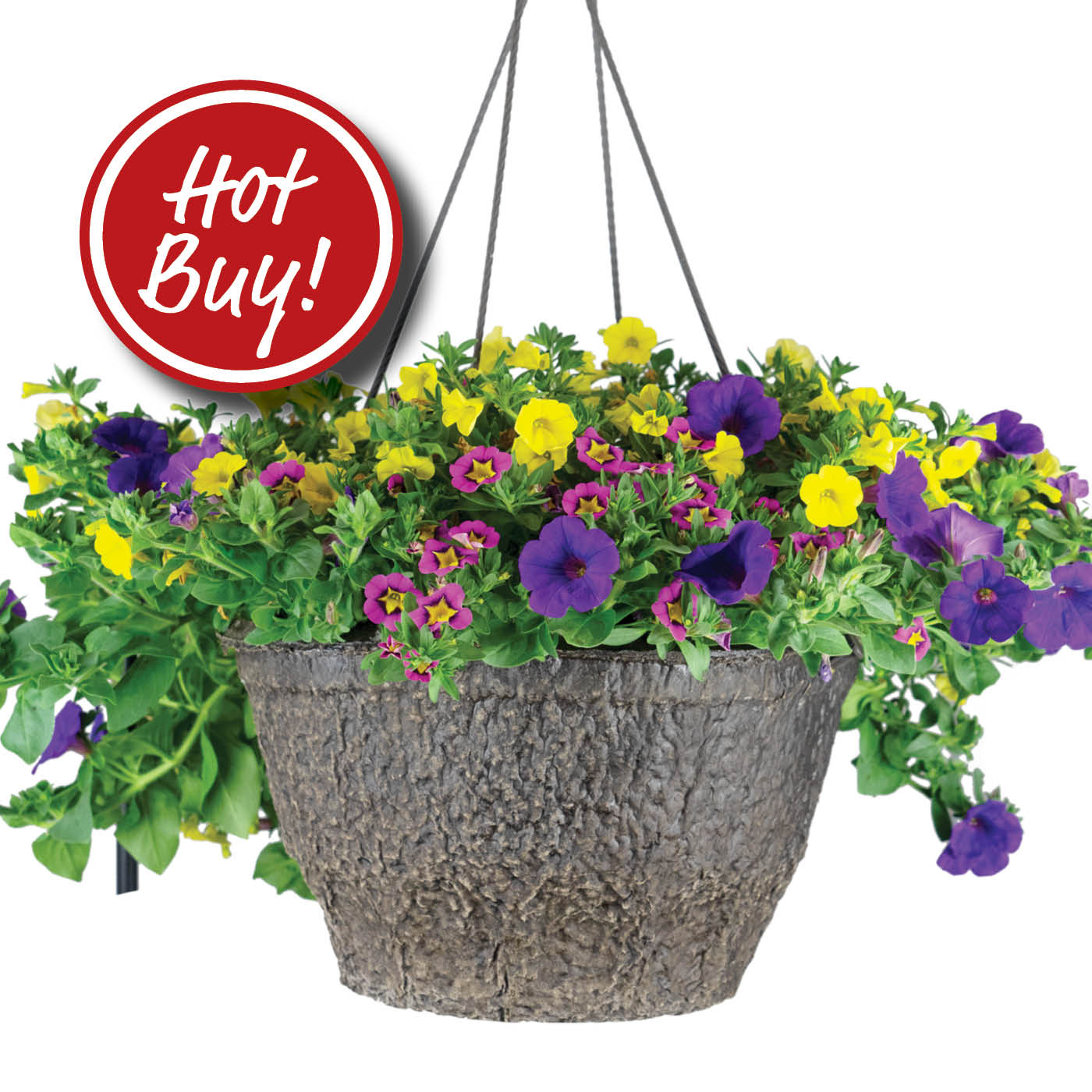 Blooming Baskets on Hot Buy!