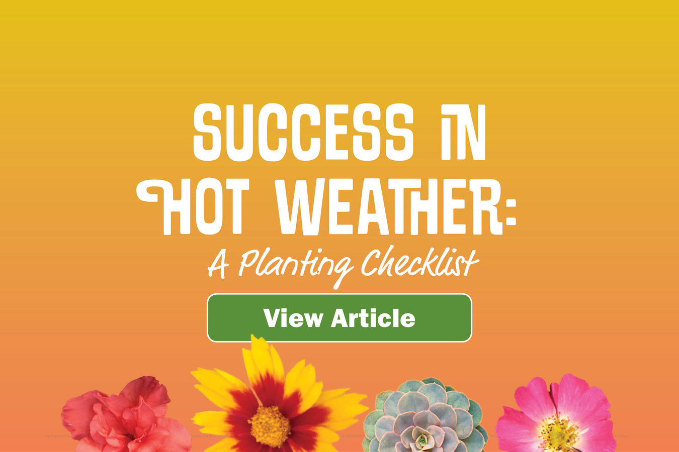 Success in Hot Weather: A Planting Checklist