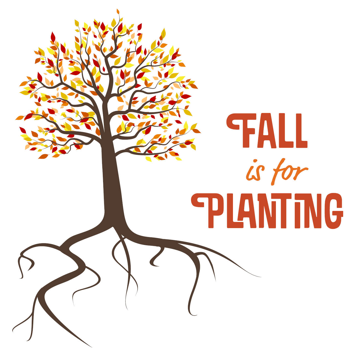 Fall Is for Planting