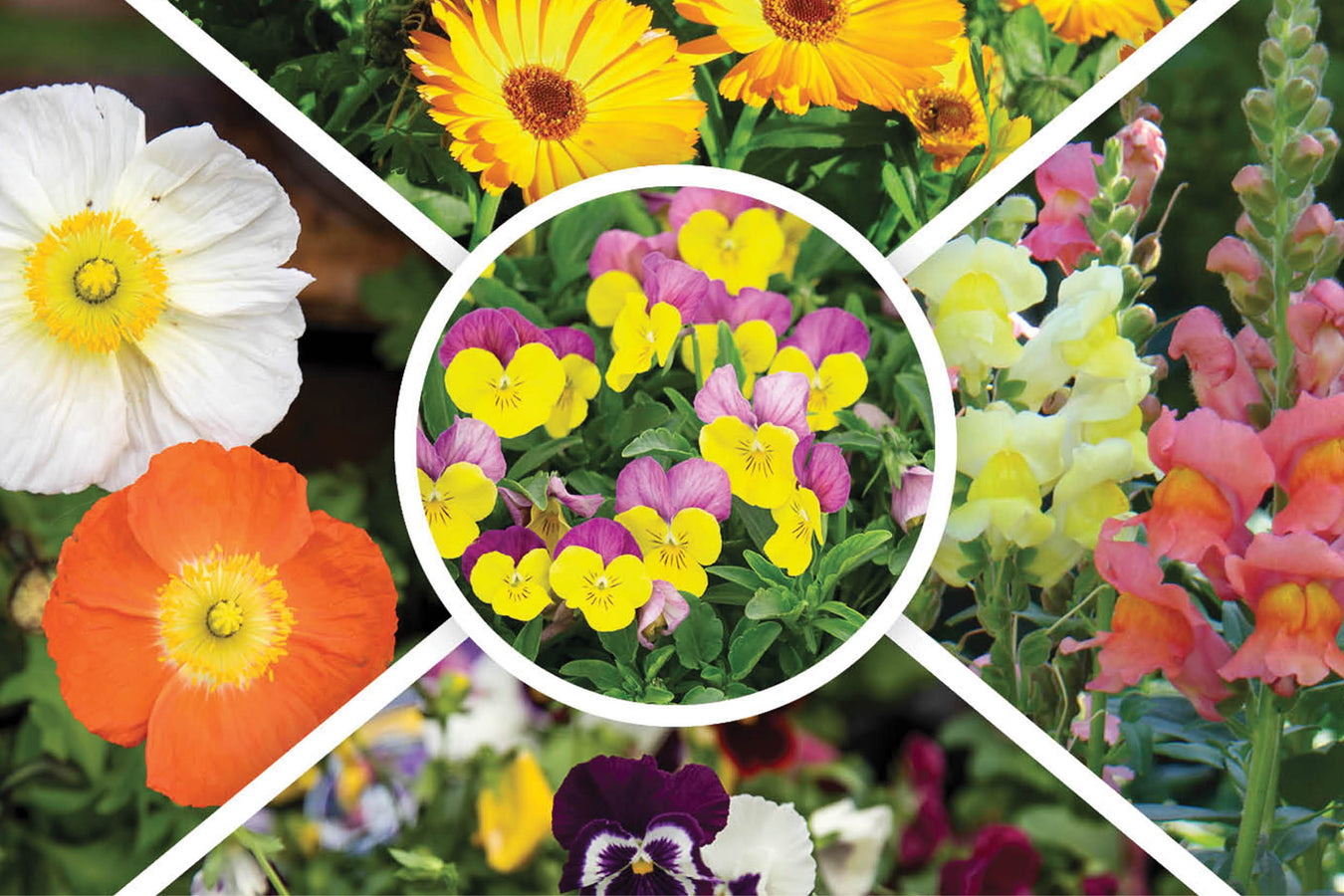 Cool Annuals on Hot Buy