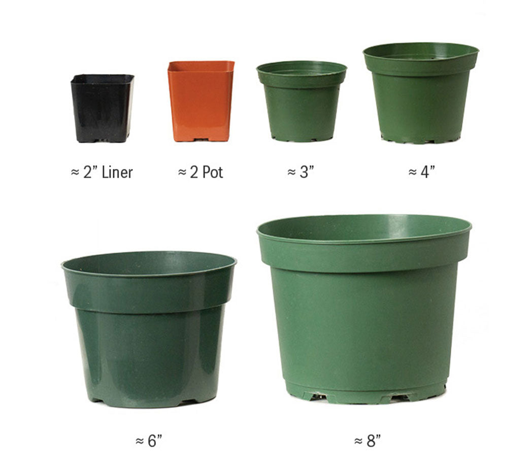 Houseplants Size Chart