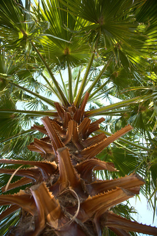 close up of a palm tree