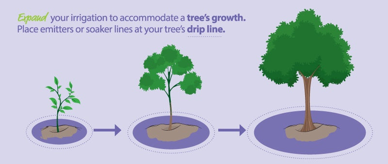 tree dripline graphic