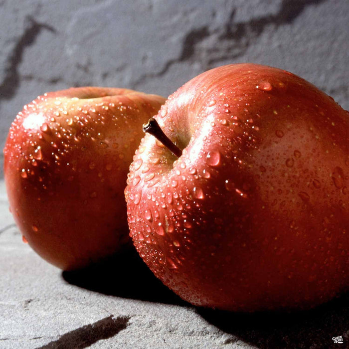 Apple 'Fuji' Dwarf