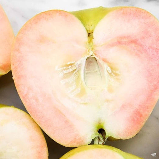 Apple 'Pink Pearl'
