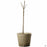 Bareroot fruit tree 15 inch fiber pot