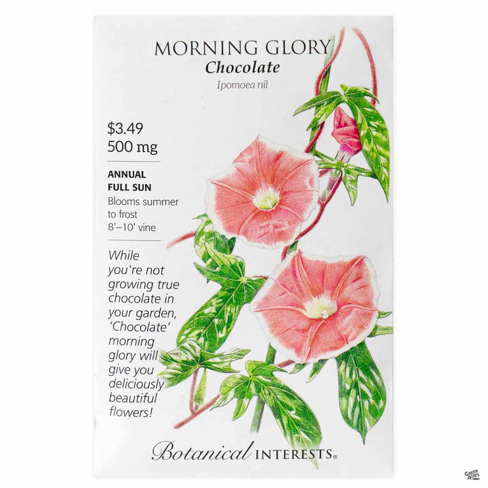 Botanical Interests Seeds Morning Glory Chocolate