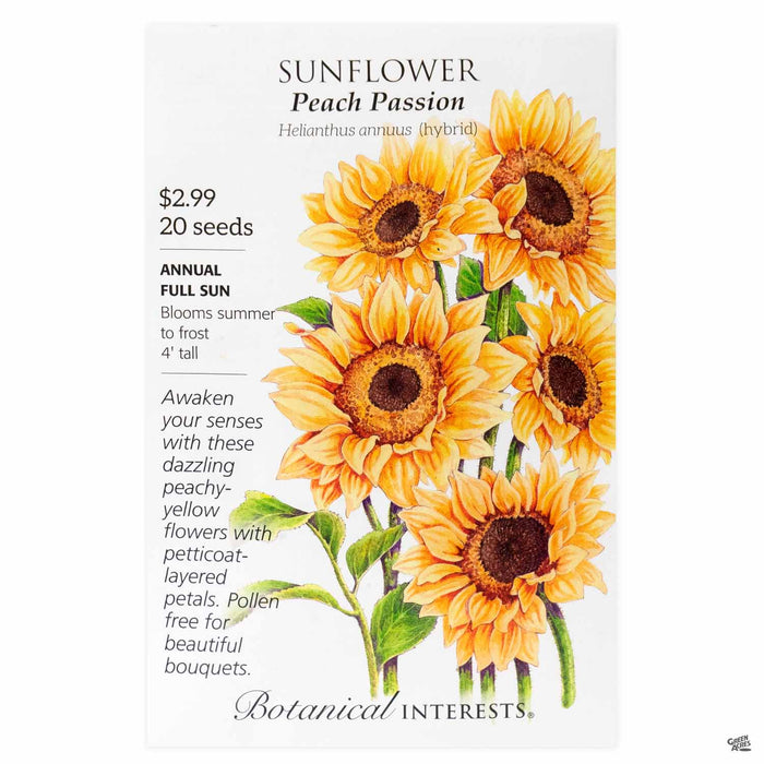 Botanical Interests Sunflower Peach Passion