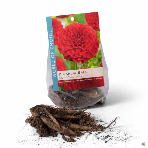 Dahlia Ball - Boom Boom Red 2- pack