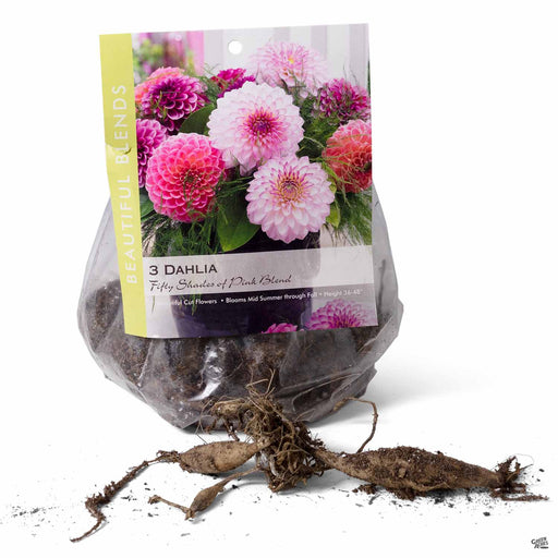 Dahlia Fifty Shades of Pink Blend 3-pack