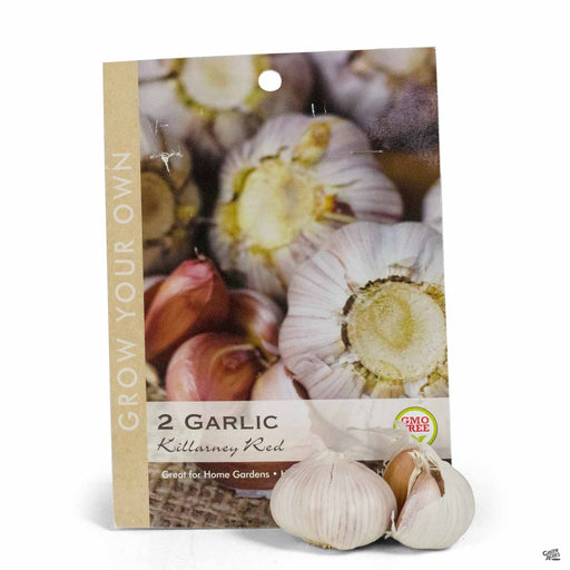 Garlic 'Killarney Red' 6-pack