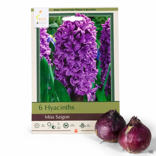 Hyacinth 'Miss Saigon' 6-pack