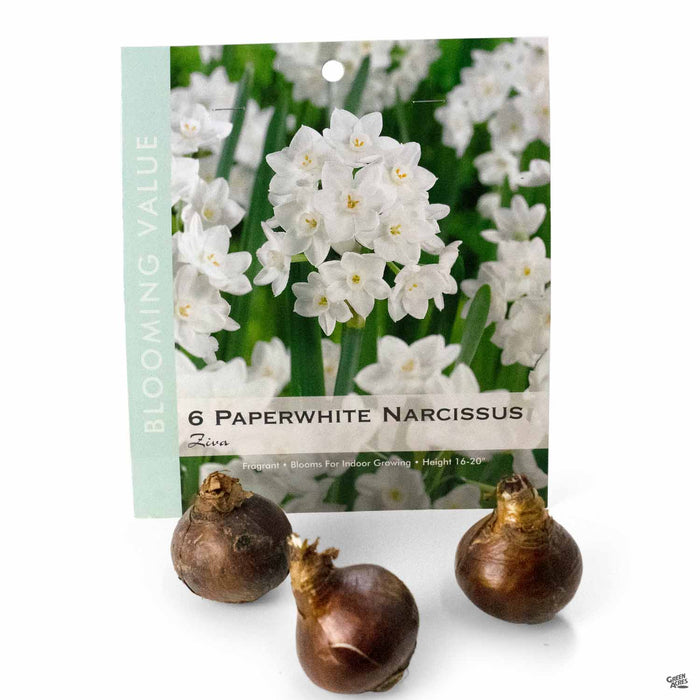 Paperwhite Bulbs Package