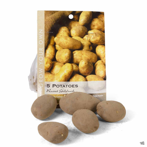 Potato Russet Goldrush 5-pack