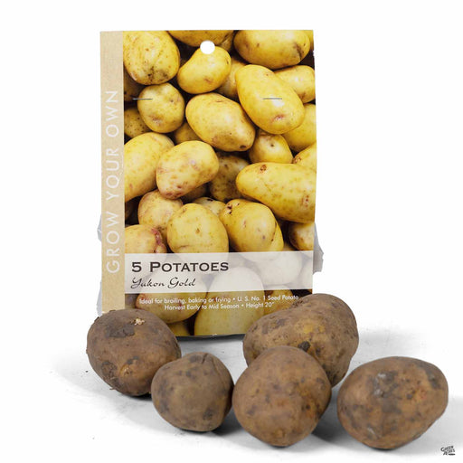 Yukon Gold Potato 5-pack