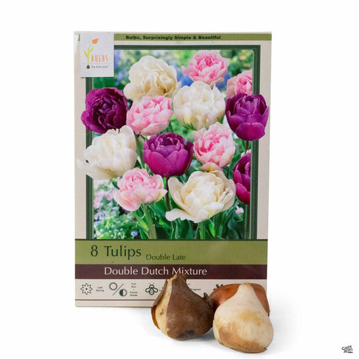 Tulips Double Late Double Dutch Mixture 8-pack