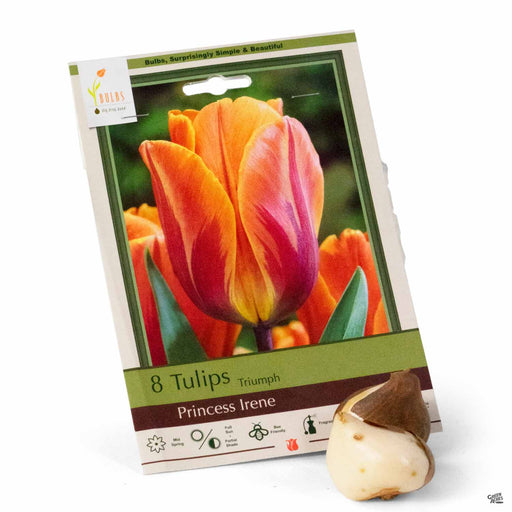 Tulips Triumph Princess Irene 10- pack
