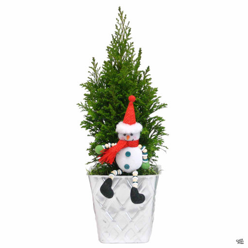 European Cypress Snowman Collection