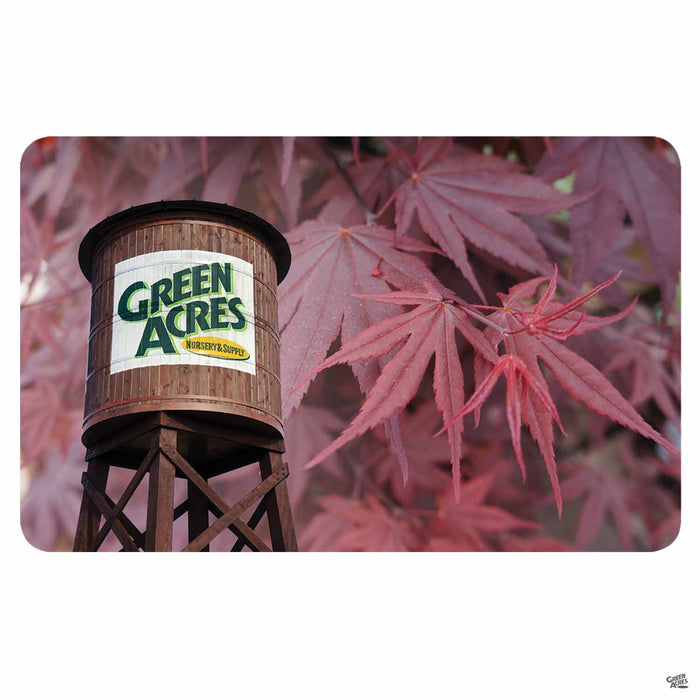 Green Acres Nursery & Supply Gift Card Japanese Maple