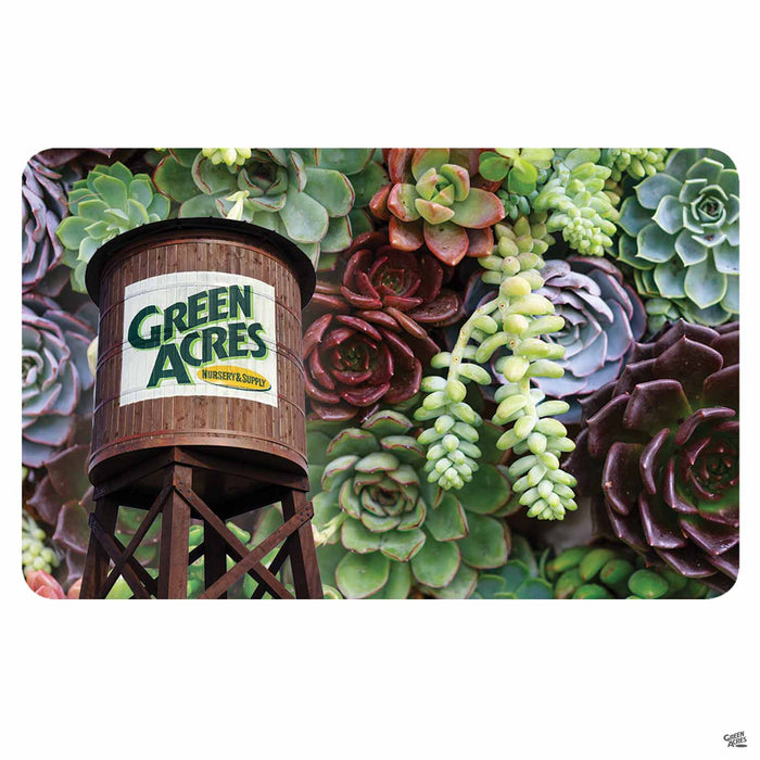 Green Acres Nursery & Supply Gift Card Succulents