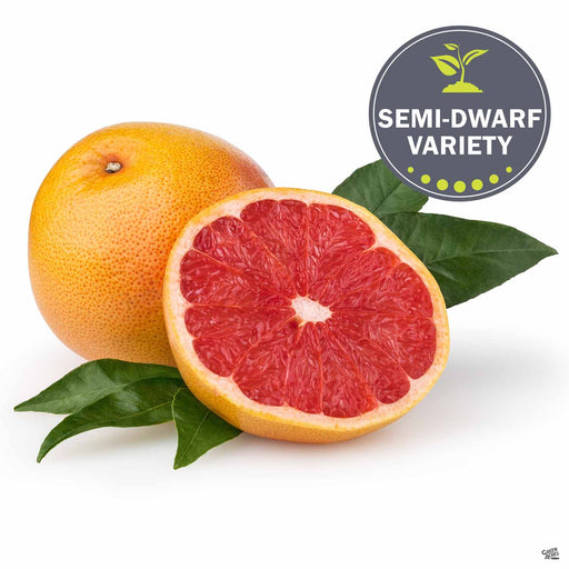 Grapefruit 'Rio Red' Fruit