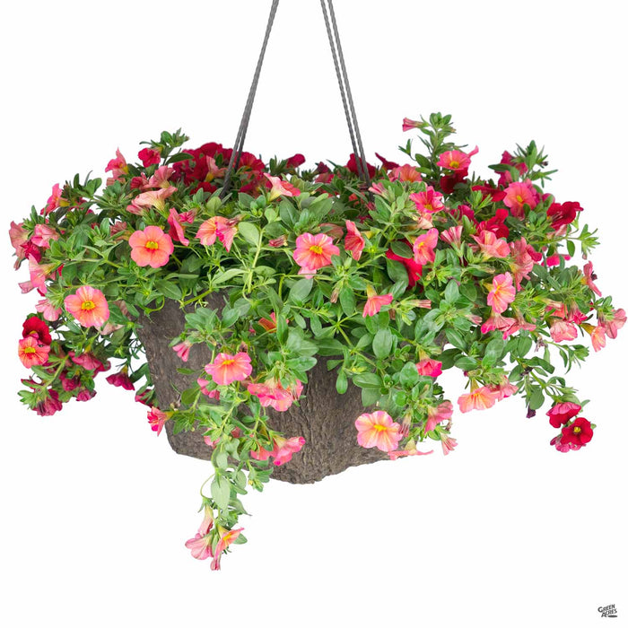Spring 2020 Calibrachoa Tropical Sunrise and Superbells Red hanging basket