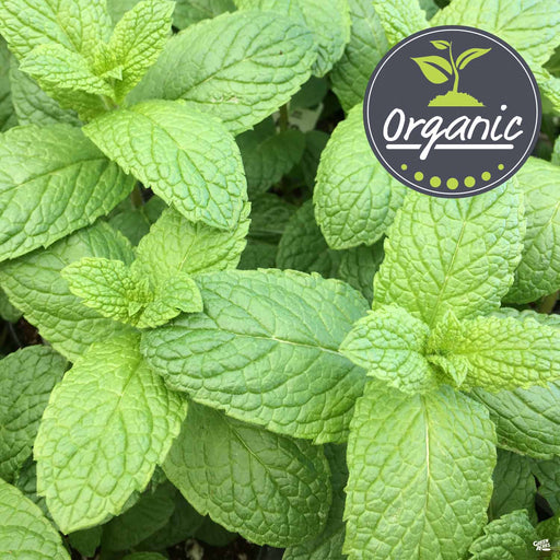 Organic Spearmint Mint