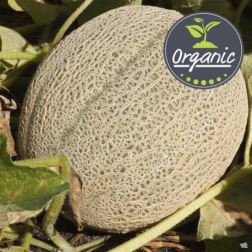 Organic 'Hearts of Gold' Melon