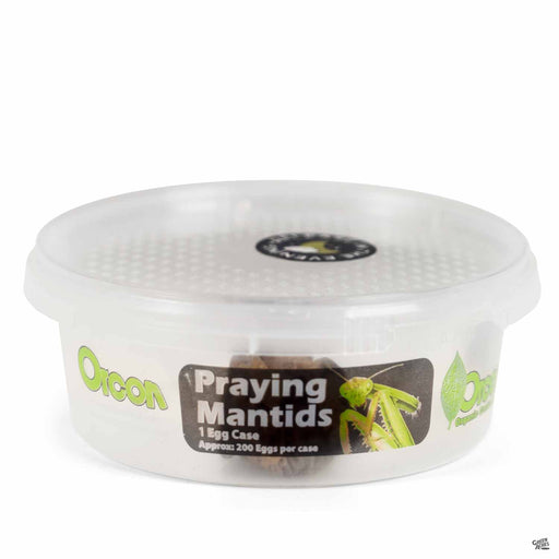 Organic Control Praying Mantids - 1 egg case