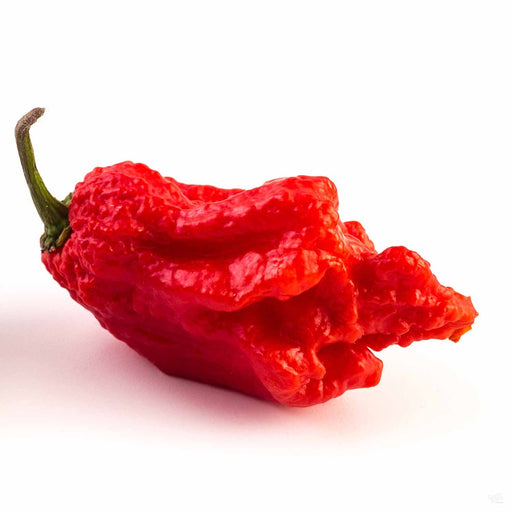 Carolina Reaper fruit