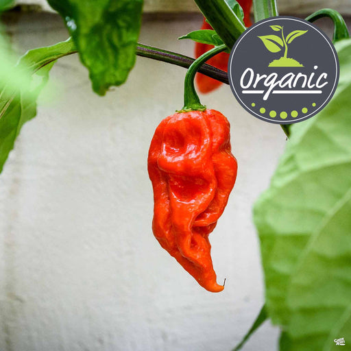 Ghost Pepper Organic