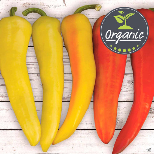 'Sweet Sunset' Pepper Organic